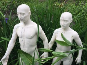male and female acupuncture models